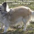 Loreen Des Muses du Haut Forez