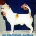 QUACHITAH LOVEBUG