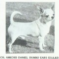 AMICHIS DANIEL DUMBO EARS