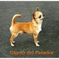 GIGOLO DEL PASADOR