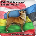 MISTY MEADOW'S SOMEBODY TO LOVE