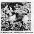 APOCO BALLYBROKE BILLY BUNTER