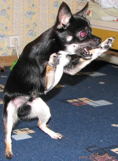 Собака бывает кусачей, но есть один нюанс